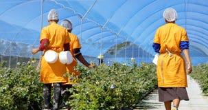 Trabalhadores que andam na exploração agrícola 4k do mirtilo vídeos de arquivo