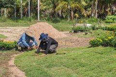 Trabalhadores que colocam a grama da grama para o gramado novo do jardim imagem de stock royalty free