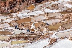 Trabalhadores que fazem seu trabalho duro em minas de sal e em bacias, Salinera imagem de stock