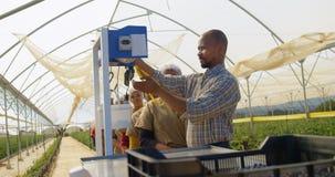 Trabalhadores que pesam sua cesta do mirtilo na fila 4k video estoque