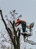 Trabalhadores que podam, aparagem, cortando ramos doentes com serra de cadeia imagens de stock royalty free