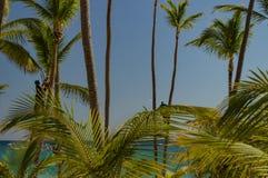 Trabalhadores que reduzem as frondas de uma palmeira fotografia de stock royalty free