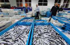 Trabalhadores que verificam a carga no mercado de peixes Imagens de Stock