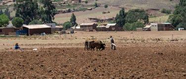 Trabalhando os campos de Bolívia imagem de stock royalty free