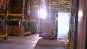 Trabalho ativo das empilhadeiras em um grande armazém moderno, interior industrial, trabalho das empilhadeiras em um armazém, tra vídeos de arquivo