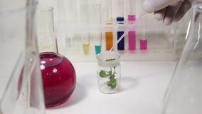 Trabalho com as plantas no laboratório vídeos de arquivo