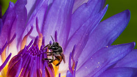 Trabalho das abelhas Imagem de Stock