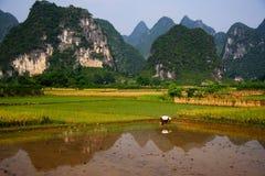 Trabalho de campo 5 do arroz Fotografia de Stock