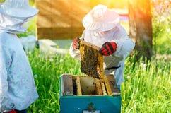 Trabalho de dois apicultor em um apiary verão imagens de stock