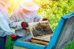 Trabalho de dois apicultor em um apiary verão imagens de stock royalty free