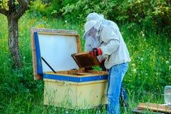 Trabalho de dois apicultor em um apiary verão imagem de stock