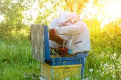 Trabalho de dois apicultor em um apiary verão fotos de stock