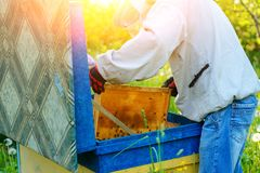 Trabalho de dois apicultor em um apiary verão fotos de stock royalty free