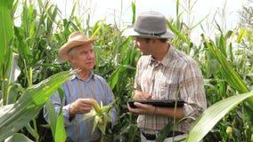 Trabalho de dois fazendeiros em um campo de milho, usando a tabuleta para gravar os resultados vídeos de arquivo