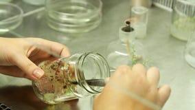 Trabalho de laboratório biológico com as plantas para a agricultura vídeos de arquivo