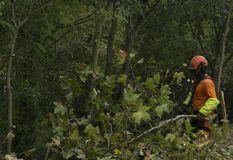 Trabalho de silvicultura Imagem de Stock Royalty Free