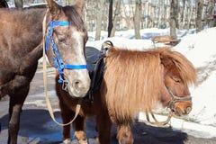 Trabalho do cavalo e do pônei no parque fotografia de stock