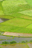 Trabalho do fazendeiro em Guizhou China fotos de stock royalty free