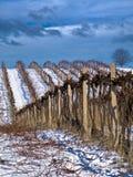 Trabalho do inverno no vinhedo Foto de Stock