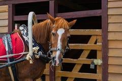 Trabalho duro do cavalo no verão Imagem de Stock Royalty Free