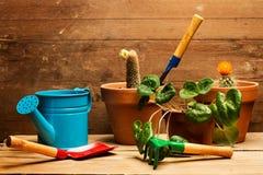 Trabalho em casa com plantas Foto de Stock Royalty Free