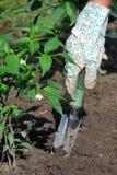 Trabalho no jardim Foto de Stock