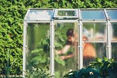 Trabalho no jardim vegetal Imagens de Stock Royalty Free