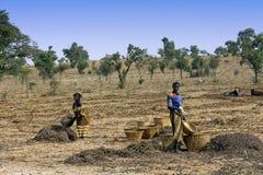Trabalho nos campos - Mali imagens de stock royalty free
