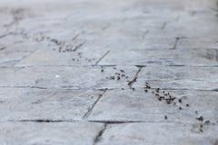 Trabalhos de equipa das formigas Fotos de Stock Royalty Free