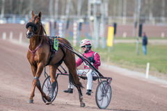 Trabrennen in Schweden Stockfotos