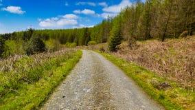 Tracce d'escursione e di riciclaggio della foresta fotografia stock