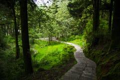 Tracce da uscire foresta in montagna di Taiwan - Alishan Fotografia Stock Libera da Diritti