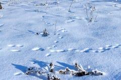 Tracce dell'animale in neve sciolta fresca Immagini Stock