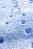 Tracce dell'animale in neve sciolta fresca Fotografie Stock