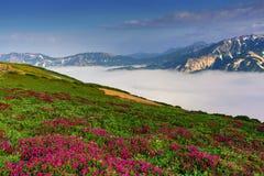 Tracce della nebbia nelle montagne Fotografie Stock Libere da Diritti
