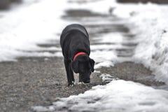 Tracce della passeggiata di inverno Fotografie Stock