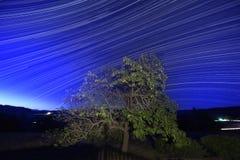 Tracce della stella dell'albero Fotografie Stock Libere da Diritti