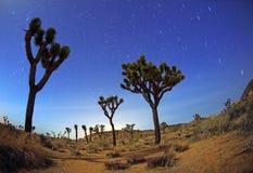Tracce della stella di notte nella sosta dell'albero di Joshua Immagine Stock