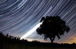Tracce della stella di Perseids Fotografie Stock Libere da Diritti