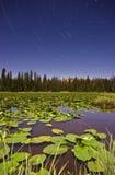 Tracce della stella di Wasatch del lago Lilly Fotografie Stock Libere da Diritti
