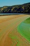 Tracce di aironi sulla sponda del fiume Fotografia Stock
