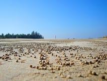 Tracce di granchi Fotografie Stock Libere da Diritti