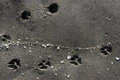 Tracce e coperture animali nella sabbia alla spiaggia, spiaggia di sabbia nera - Mar Nero, Georgia, bello fondo fotografia stock