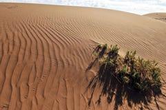 Tracce nel deserto Fotografia Stock