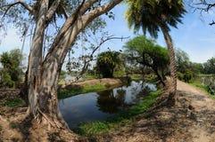 Tracce nel parco nazionale di Keoladeo Fotografia Stock Libera da Diritti