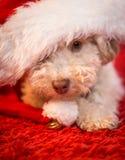 Tracción del árbol de navidad Foto de archivo libre de regalías