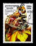 Tracci il levana di Araschnia della farfalla, serie delle farfalle, circa 1999 Fotografia Stock