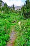 Traccia abbandonata nell'alta foresta alpina della conifera davanti alle montagne del Glacier National Park Fotografia Stock Libera da Diritti