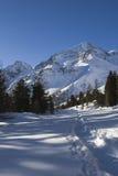 Traccia alpina degli snowshoes Immagine Stock