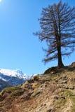 Traccia alta nelle alpi svizzere Immagine Stock